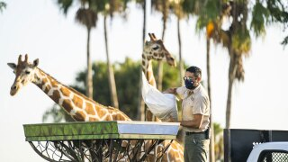 Busch-Gardens-Tampa-Bay.jpg