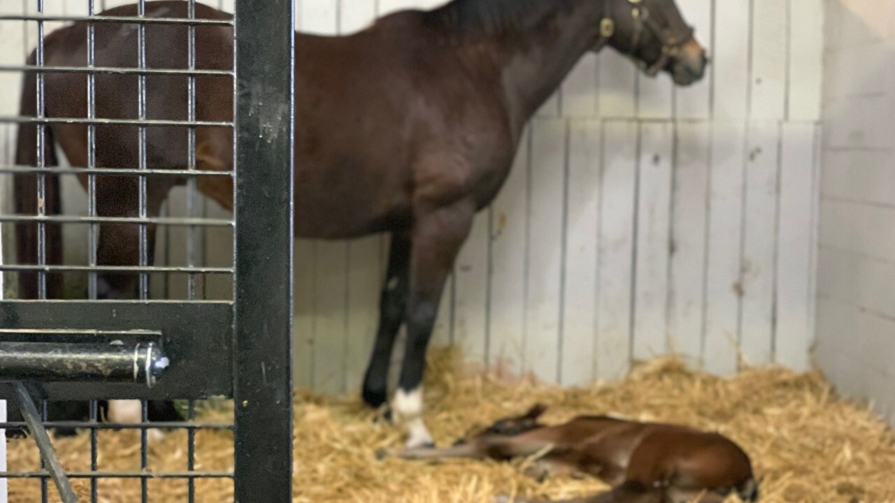 First filly of foaling season born in the Bluegrass
