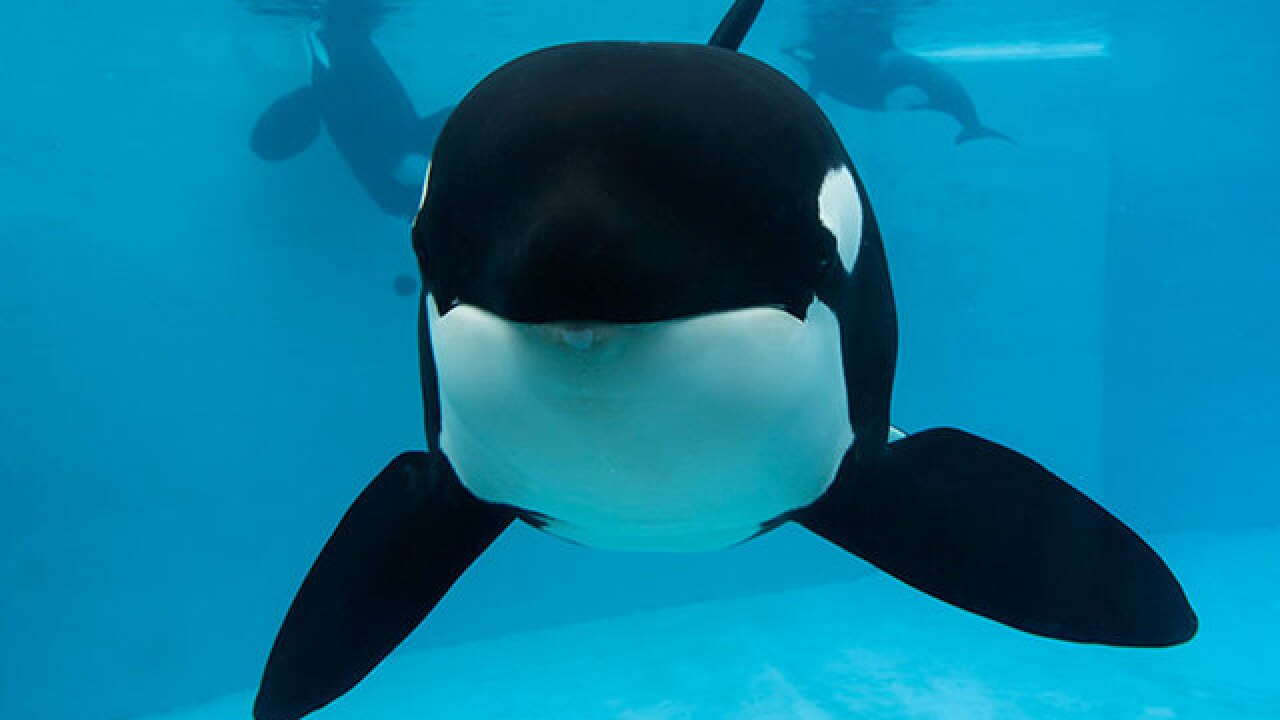 SeaWorld announces new year-round pass