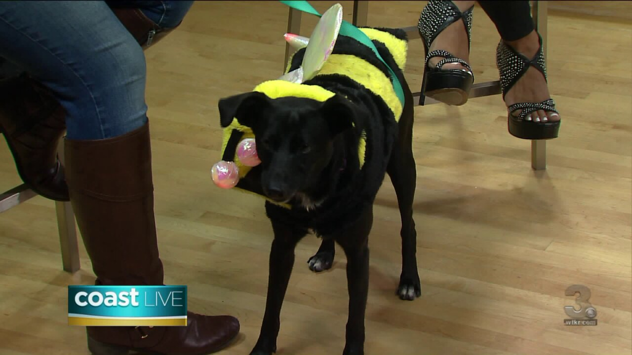 Getting ready for Care-A-Lot's 2019 Fall Fur Adoption event on CoastLive