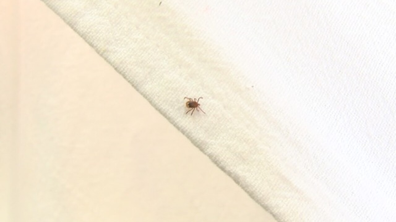 Early tick season start causing concern