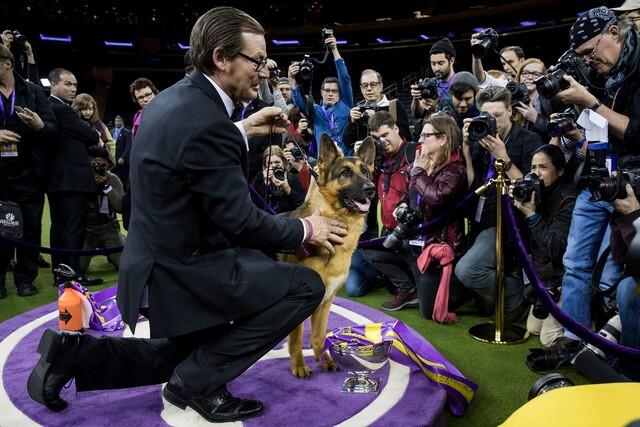 PHOTOS: 2017 Westminster Dog Show