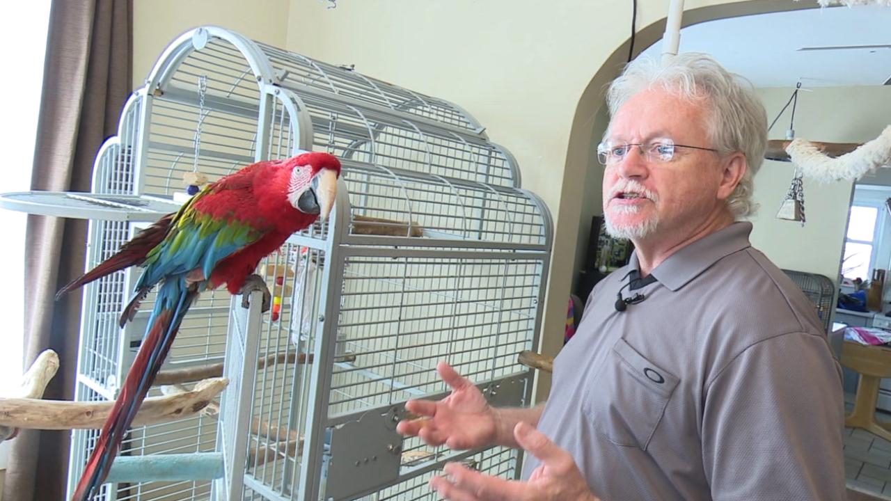 Soft Landing Parrot Rescue