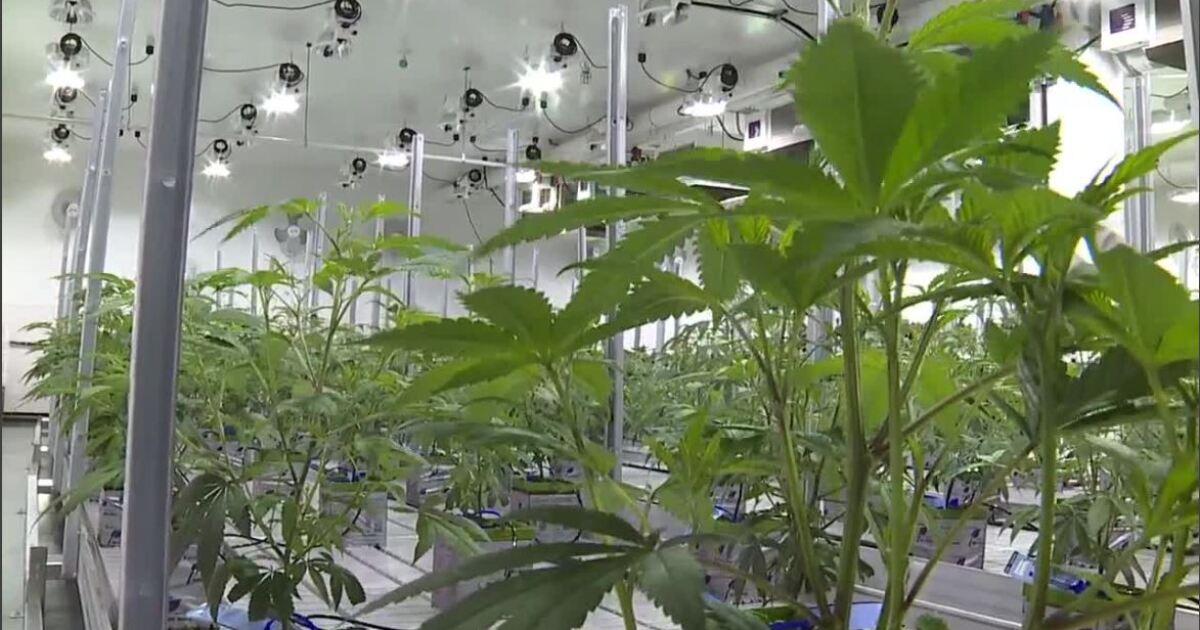 Jacky Rosen talks banking with local marijuana businesses