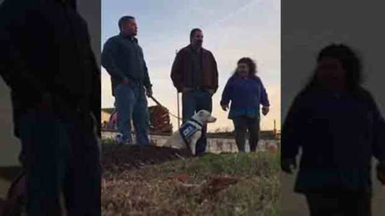 Local Veteran Receives Service Dog From Non-Profit
