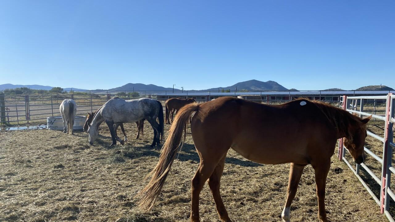 Horse Neglect Case