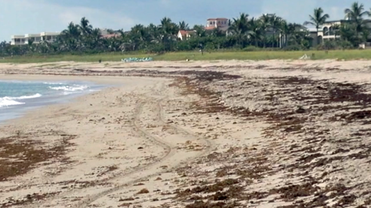 Bathtub Beach reopens to swimmers after algae spotted