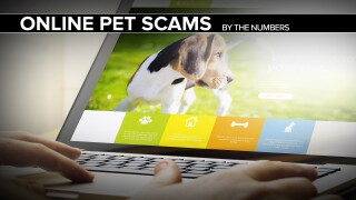 Online pet purchase scams run rampant