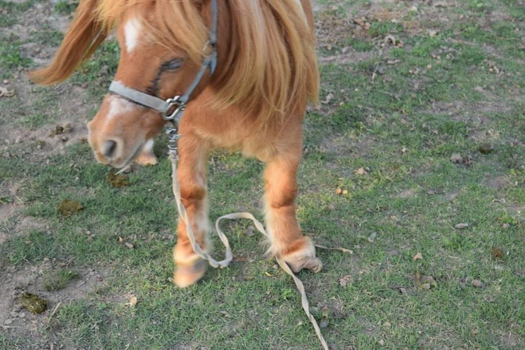 Animal Cruelty 2.jpg