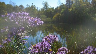 Indiana panel gives OK to 2 new state nature preserves