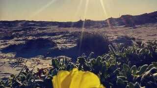 Sparkling sunshine - Photo By: FB Coastal Bend Weather Watcher Edwin Soto