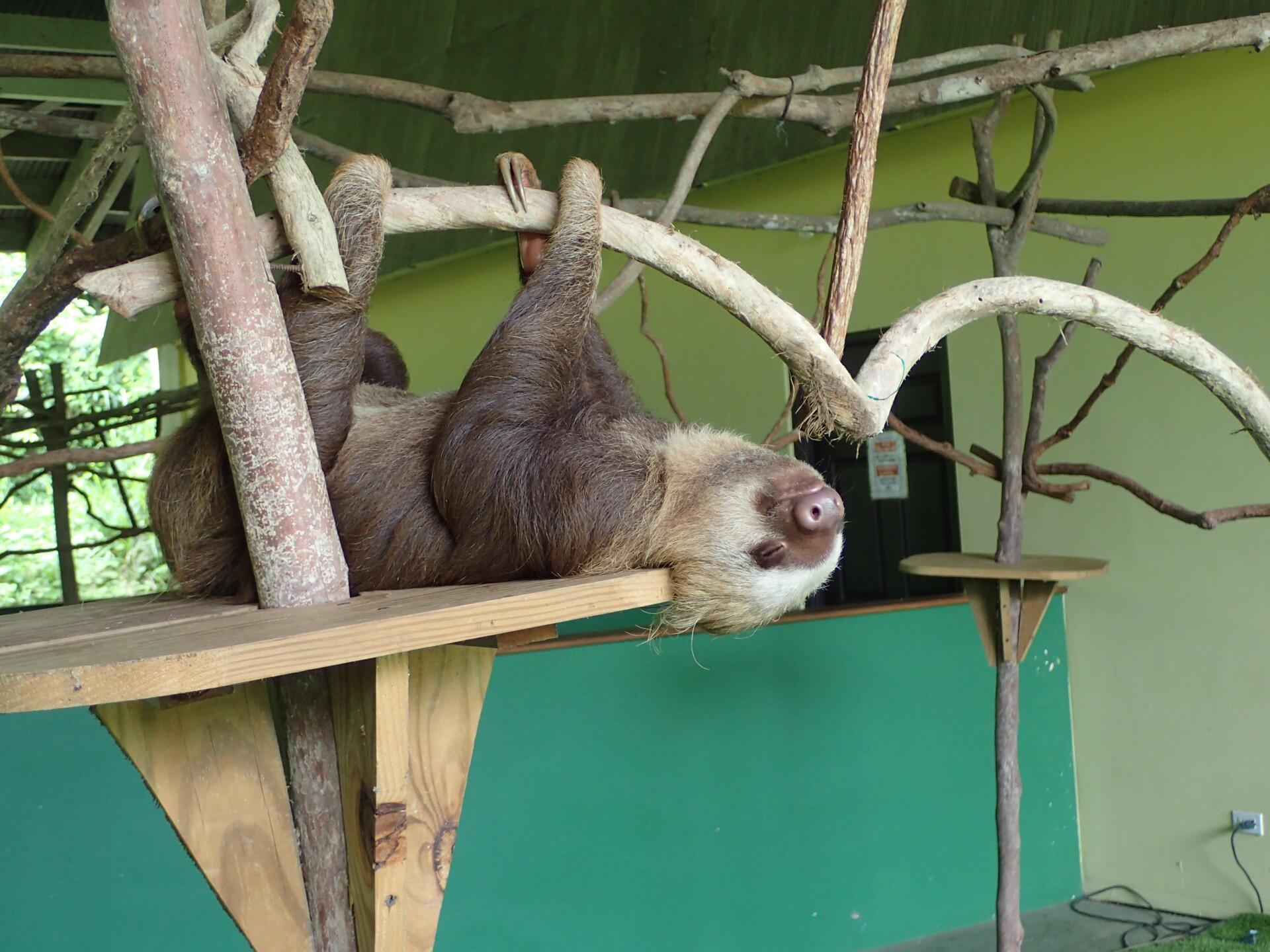 Baby Sloths (33).JPG