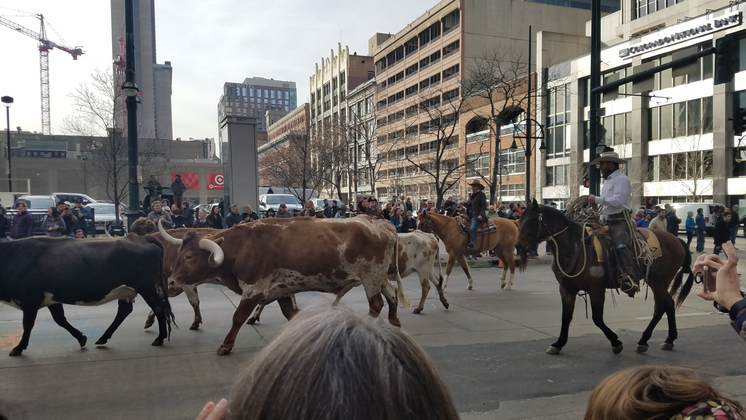 113 National Western Stock Show kick off parade_3.jpg