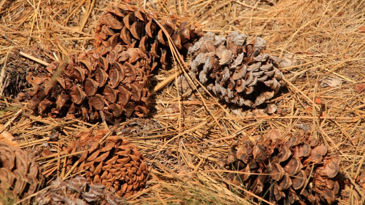 DryForest.jpg