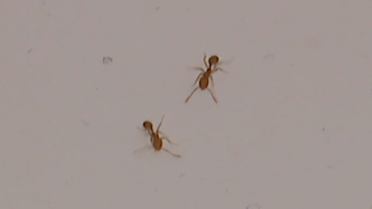 Richmond Hts. tenants report apt. ant attack