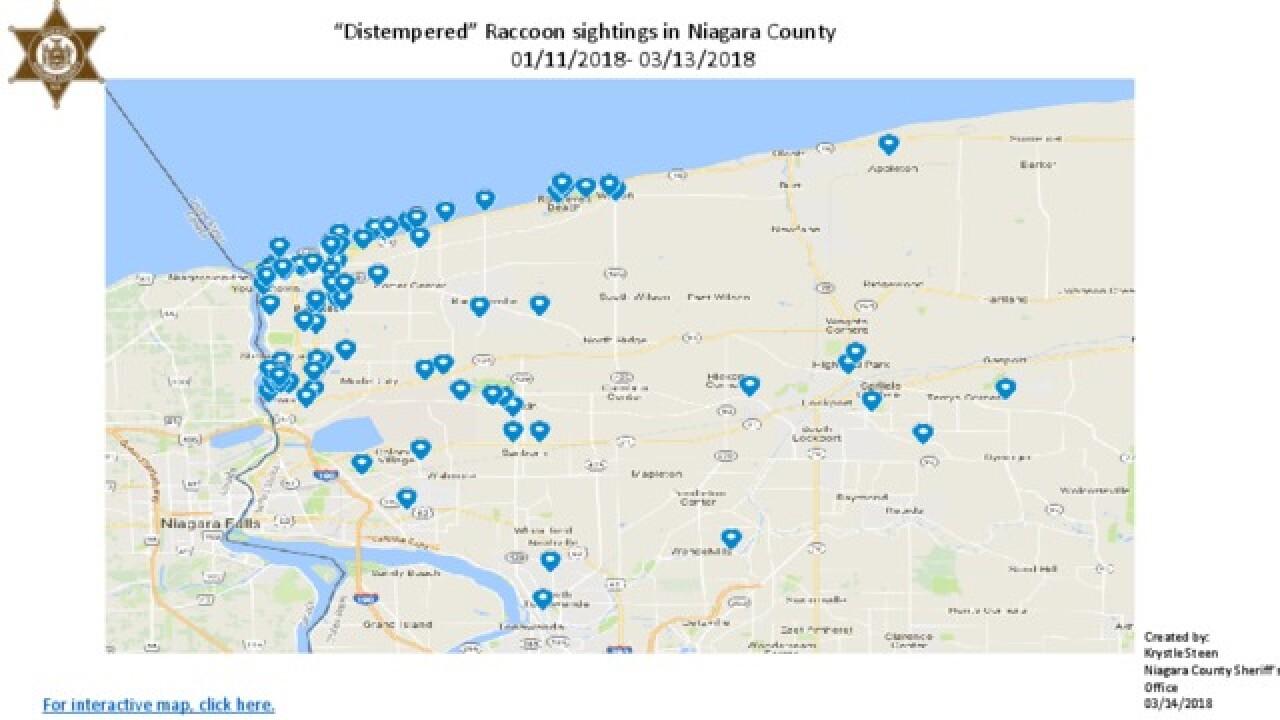 Distemper outbreak reported in Niagara County