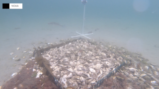 COVID-19 helping to restore reefs from coast-to-coast