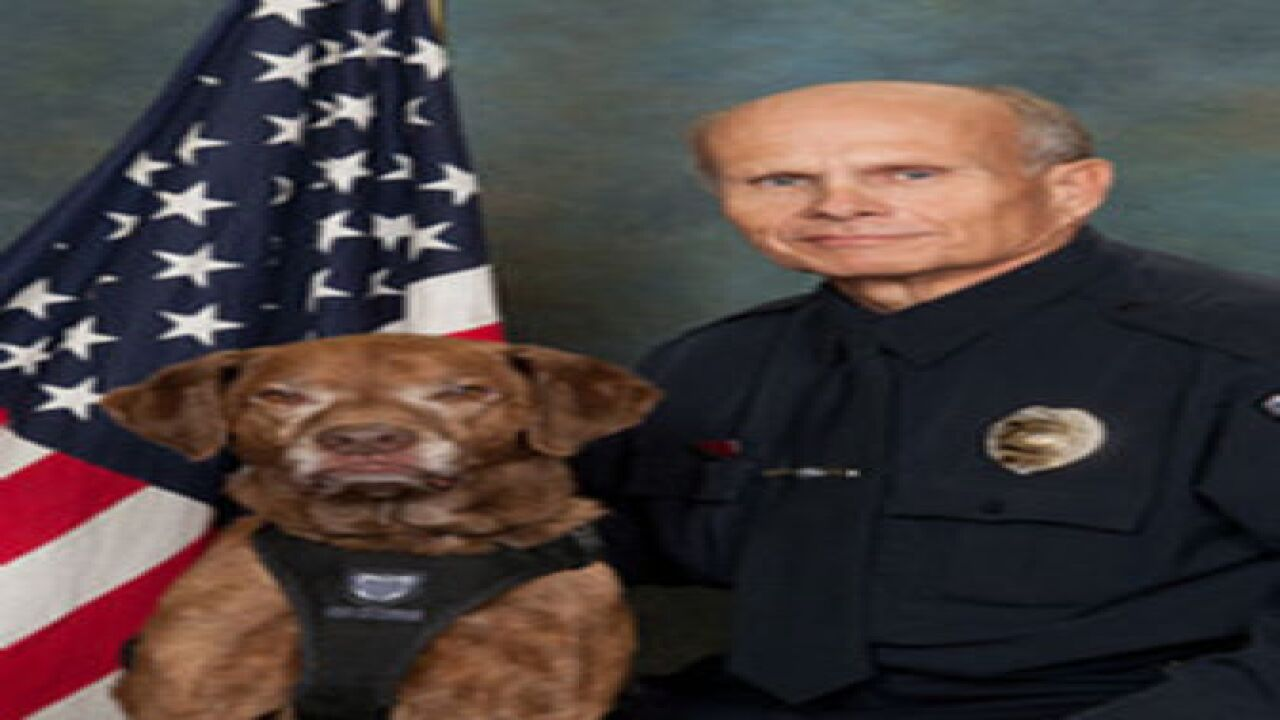 Emmett Police Chief and K-9 involved in crash