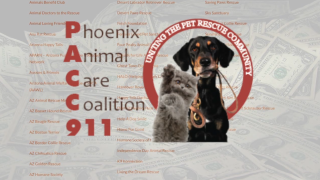 KNXV PACC911 Phoenix Animal Care Coalition