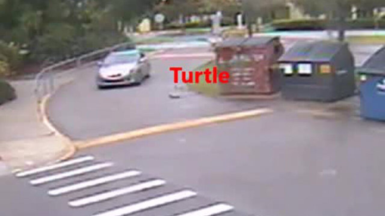 VIDEO: Florida driver intentionally runs over protected gopher tortoise