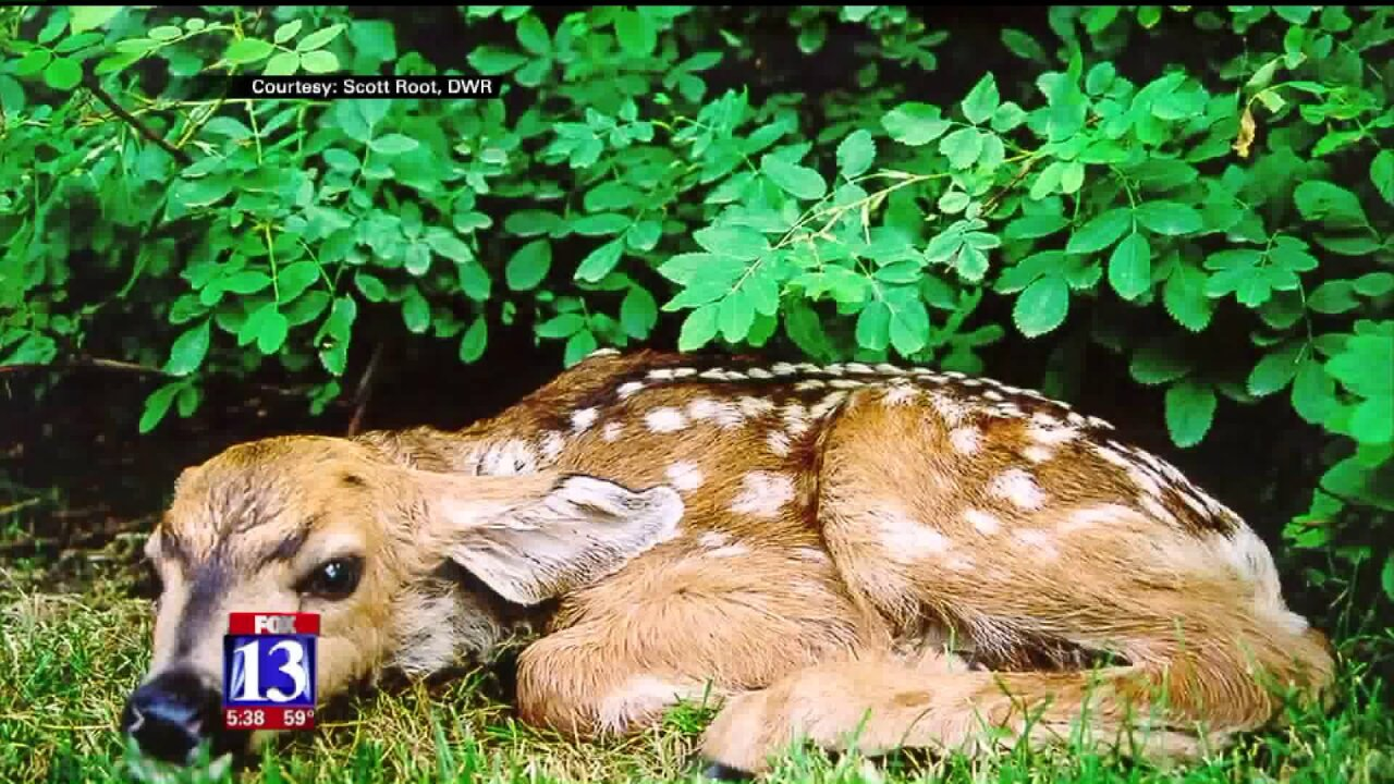 Wildlife officials say baby animals may be adorable, but keep yourdistance
