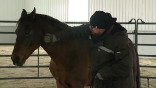 War Horses for Veterans
