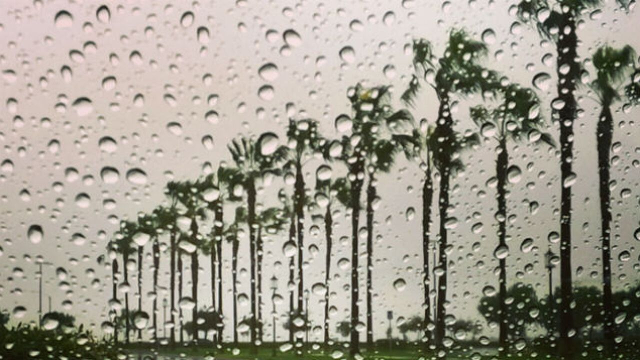 raindrops San Diego palm trees