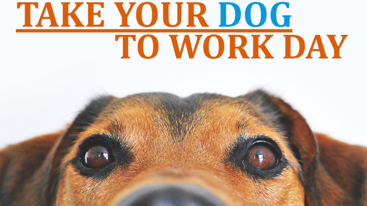 Friday is 'Take Your Dog to Work Day'