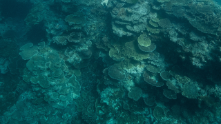 Great-Barrier-Reef-coral-GETTYIMAGES.png