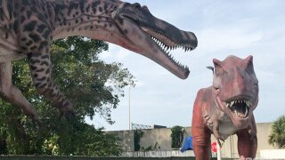 Life-size dinosaurs roar and tower over the South Florida Science Center and Aquarium