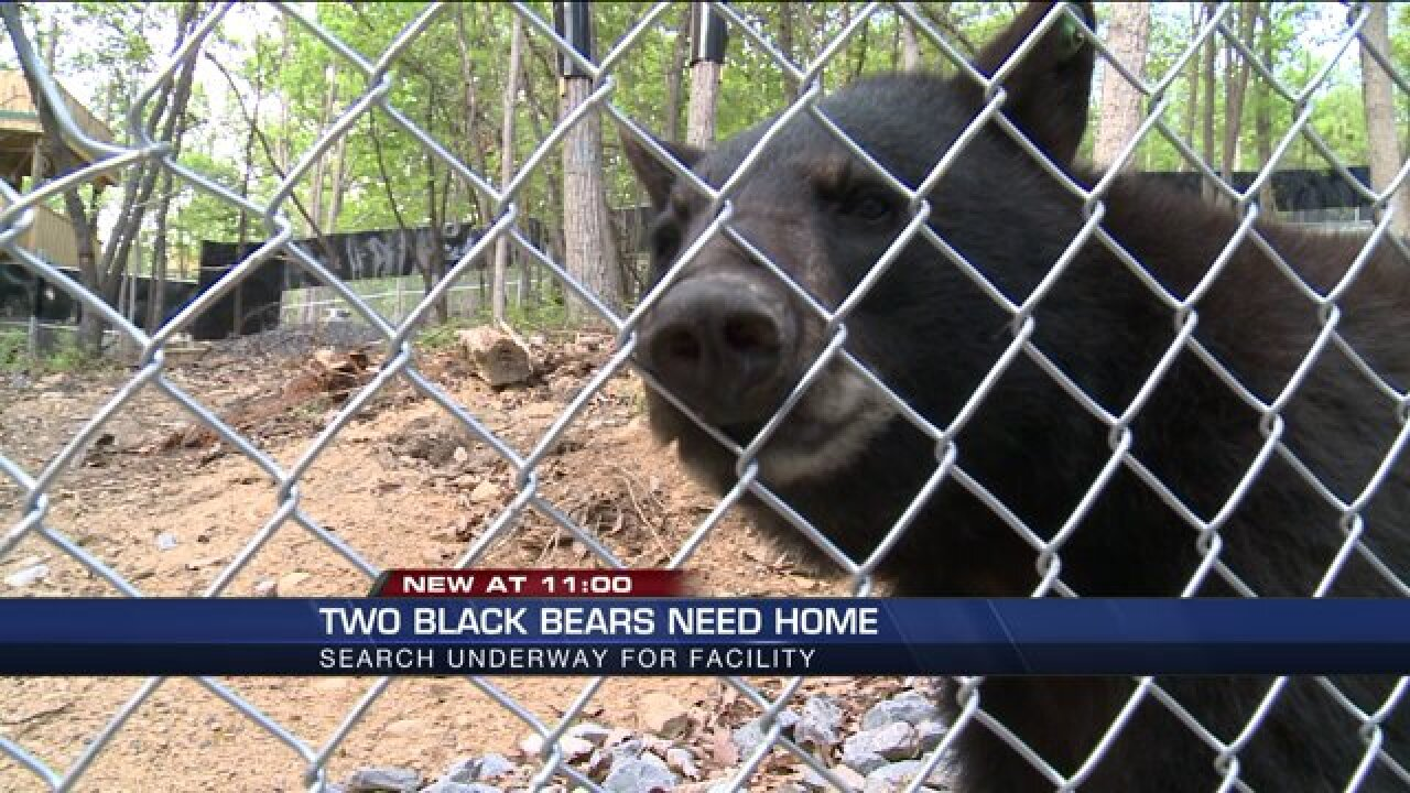 Bears ripped from wild and raised as pets need newhome