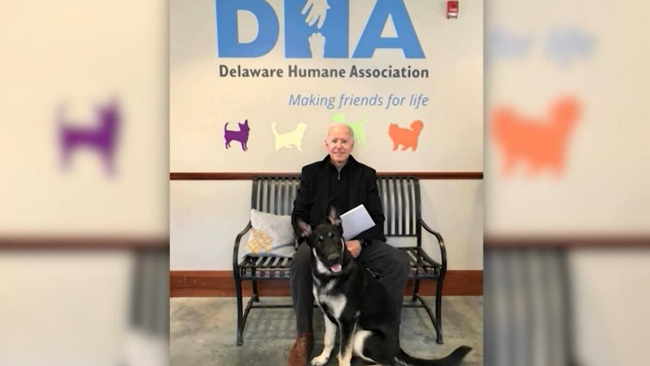 Return of the 'First Pet': President-elect Biden will bring 2 dogs to White House