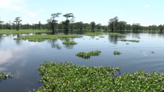 atchafalaya basin.PNG