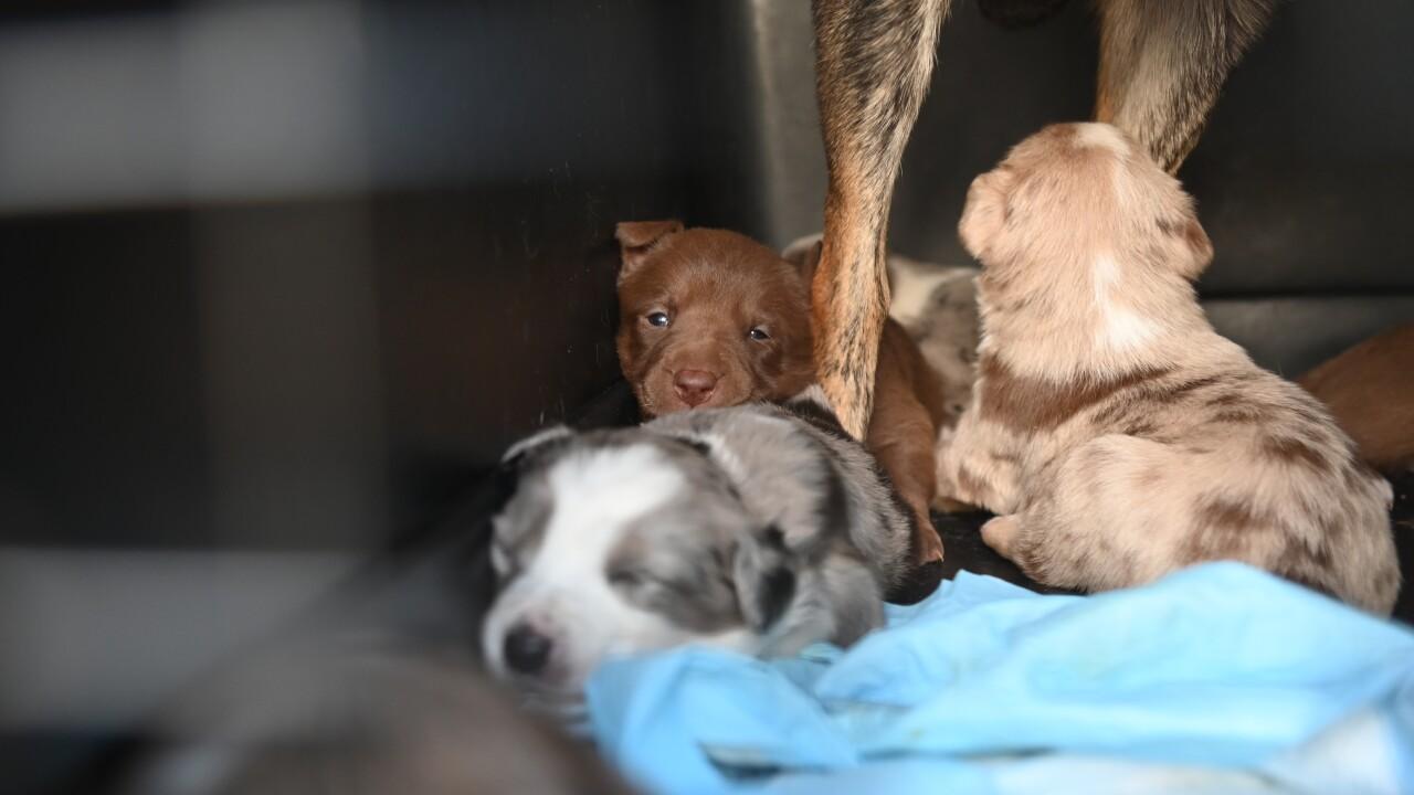 helen woodward puppies from texas_1.JPG
