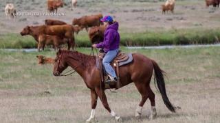 Montana Ag Network: Robinson makes stockgrowers history