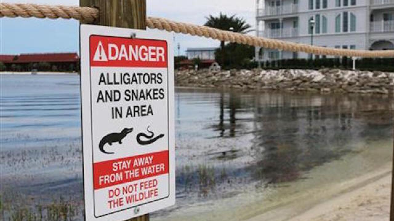 Walt Disney World worker fired, rehired after alligator tweet
