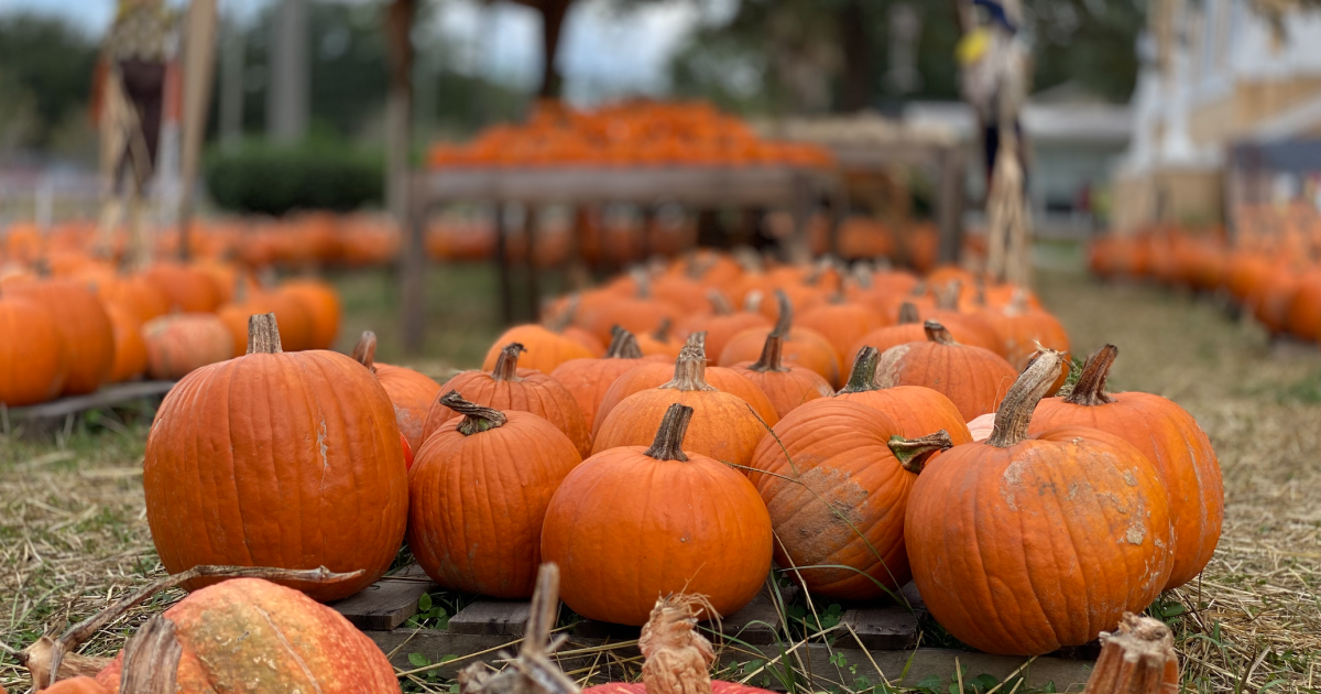 Pumpkin patches at local churches crucial to making up for lost funds during COVID-19 pandemic
