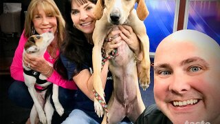 """Wag Your Tail Wednesday: Leah and Littia each need a """"FURever"""" home"""