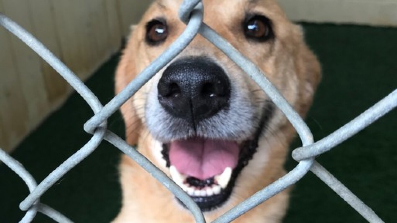 Dogs travel 1,847 miles for forever homes