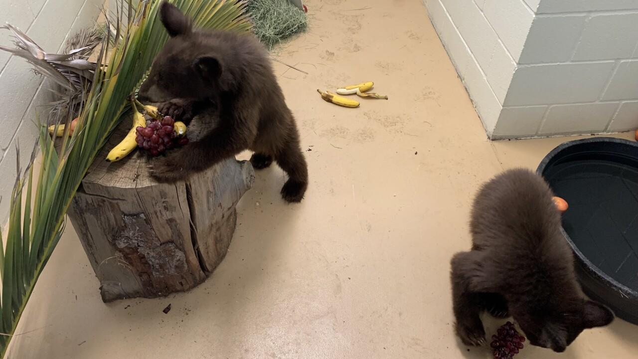 san diego humane bear cubs 09022021_3.jpg