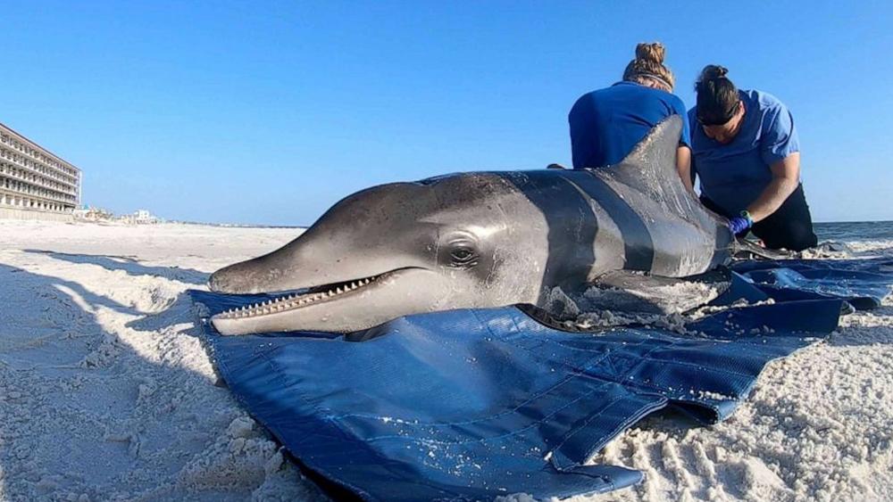 Deceased-Dolphin-Douglas-R.-Clifford-ZUMAPRESS.com-Newscom.png