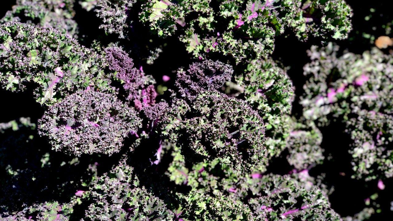 hollis-gardens-lakeland5.jpg