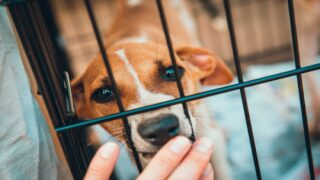 Pet Rescue Is Picking Up Dogs From Kill Shelters To Meet Foster And Adoption Demand