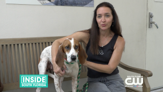 Save a Pet and Visit the Humane Society of Broward County