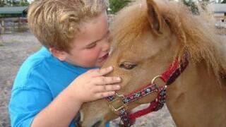 wptv-personal-ponies-florida.jpg