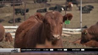 Montana Ag Network report for April 15