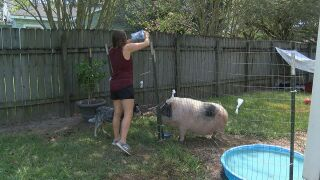 Lynette and Gus the pig.jpg