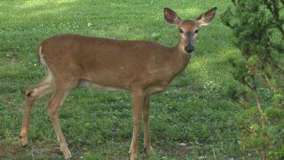 Montcalm County deer may have had chronic wastingdisease