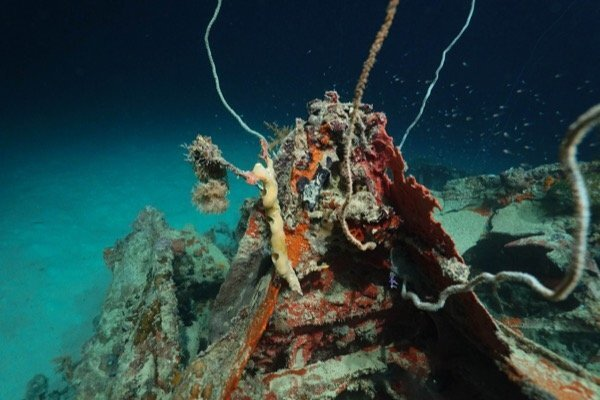 Photos: Downed WWII bomber found in Pacific 72 years later