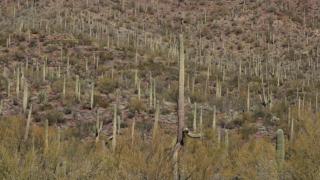 KNXV Arizona-Sonora Desert Museum